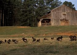Yamaha Outdoors Tips — Scatter Spring Turkeys