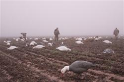 Hunting spring snow geese requires big decoy spreads and teamwork. Yamaha Outdoors photo