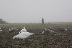 Yamaha Outdoors Tips — 10 Ways to Hunt Light Geese