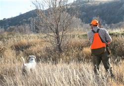 Yamaha Outdoors Tips — What's the Right Hunting Dog?